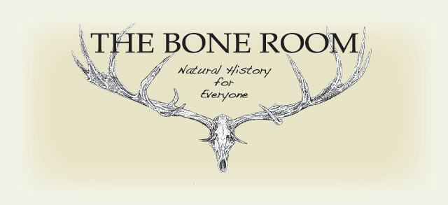 Shop The Bone Room
